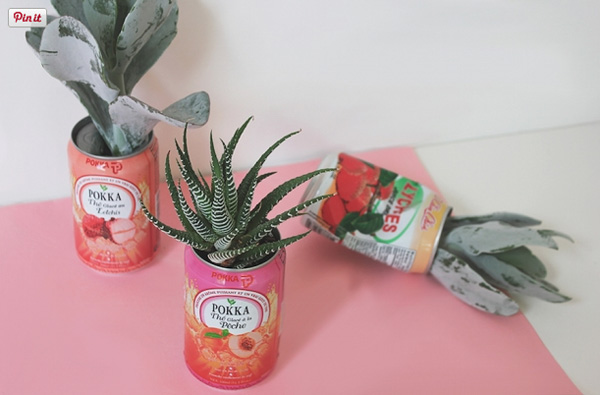 Cactus and succulent DIY plant pots