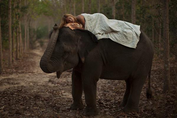 KaterinaPlotnivoka_Elephant
