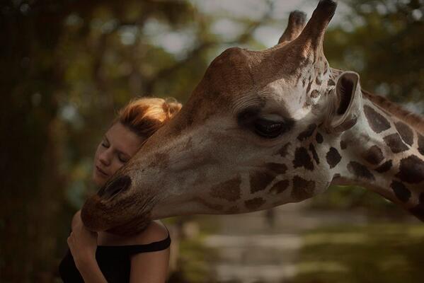 KaterinaPlotnivoka_Giraffe