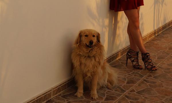 Ibiza_Sunset_Salinas_Shadow_Dog