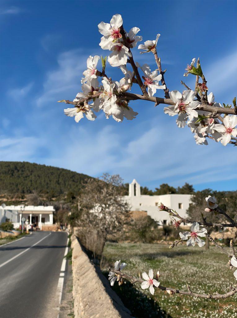Ibiza Almond Blossom